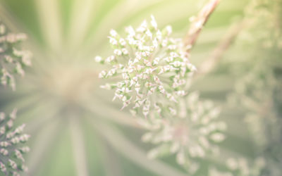 Top 6 Ayurveda Frühlingstipps für mehr Energie und Leichtigkeit